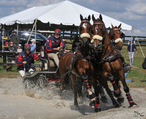 Chester Weber wins the FEI 2* Horse Teams division at the Hermitage Classic CDE (Photo courtesy of Pics Of You)