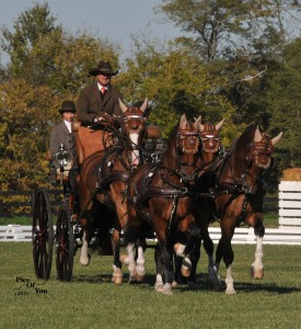 Chester Weber leads the FEI 2* Four-in-Hand division at the  Hermitage Classic CDE after the dressage phase (Photo courtesy of Pics Of You)