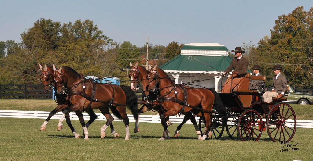 Team Weber Sets a Winning Tone in  Dressage as 2015 Hermitage Classic CDE  and Fall Festival Opens
