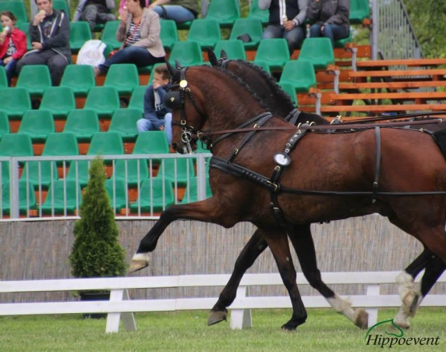 Team Weber 2016:  New Horses and U.S. Tournaments  Announced