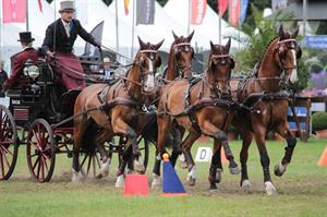 Weber Finishes Fourth at 2016 FEI World Driving Championships for Four-in-Hand