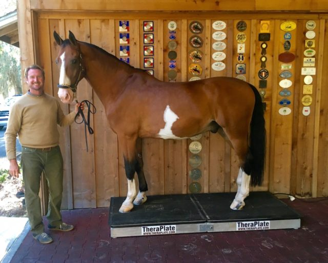 13-Time USEF Four-in-Hand National  Champion Combined Driver Chester Weber  is a TheraPlate Brand Ambassador