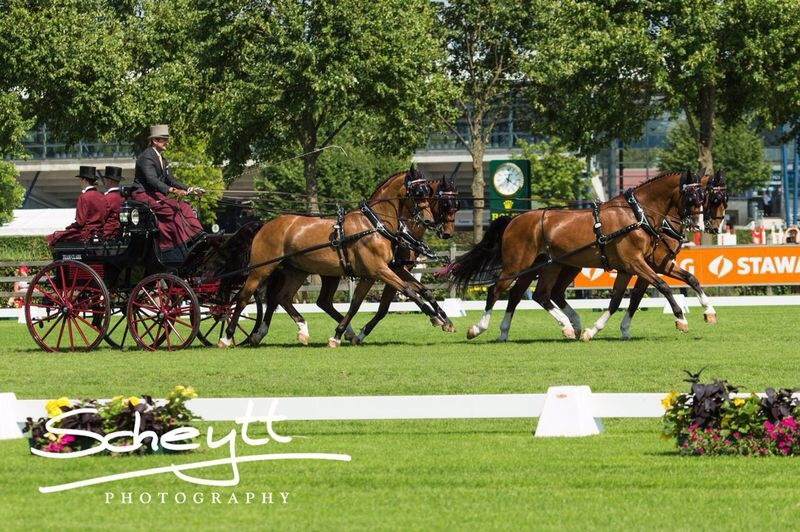 Team Weber Takes the Lead Following Dressage Phase at CAIO4* Aachen