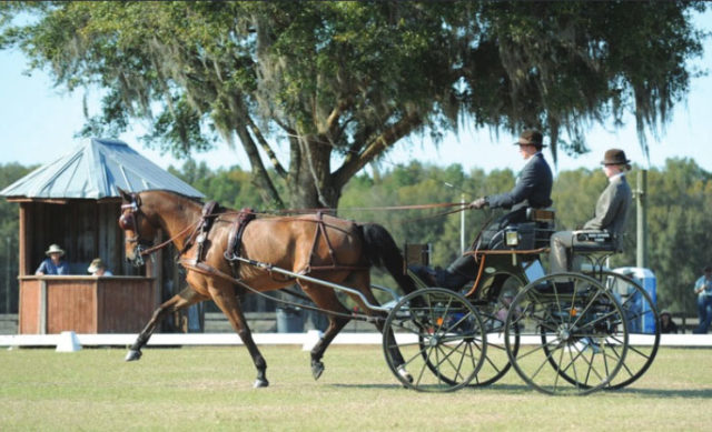 Chester Weber Sets New Record at Kingdom of the Sun CDE Live Oak Driver Apprentice Jacob Arnold Scores Personal Best