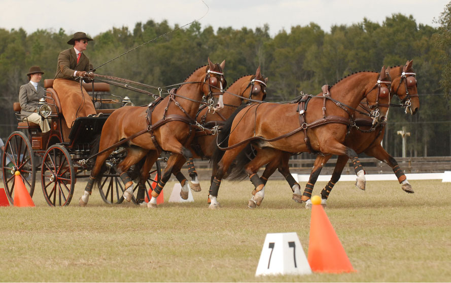 eam Weber Kicks Off 2012 With Win – Chester Weber Drives Away With Victory At  Sunshine State CDE At Florida Horse Park