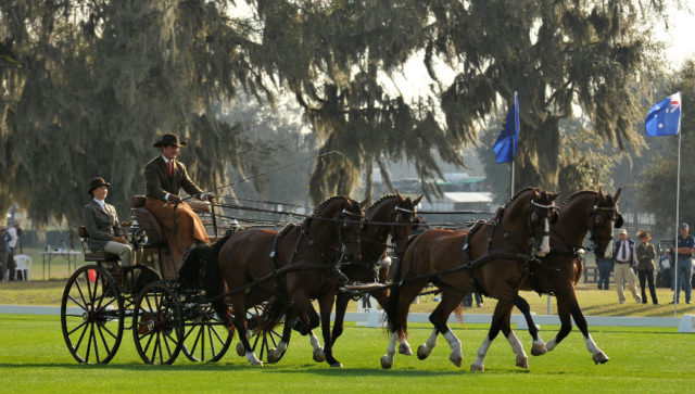 Chester Weber Captures FEI Four-In-Hand Division At  2012 Little Everglades Combined Driving Event