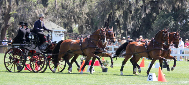 Chester Weber Breaks Record With Ninth USEF National Four-In-Hand  Championship Win During 2012 Live Oak International