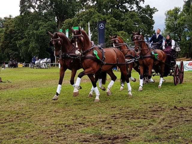 US Driver, Chester Weber Wins Four-In-Hand   Combined Driving at Germany's Donaueschingen CHI3*
